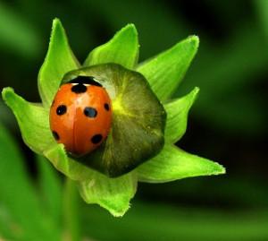 ladybug quotes - Google Search
