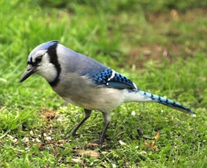 birds_of_spring_4_by_dracoart_stock-d3f3sfb.jpg
