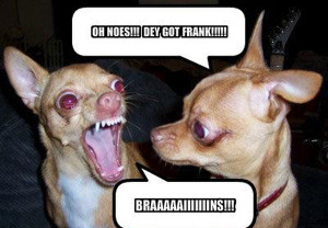 Really Funny Pictures Of Dogs