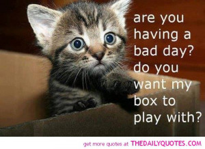cute-kitten-cat-pics-animal-lover-bad-day-quotes-pictures.jpg
