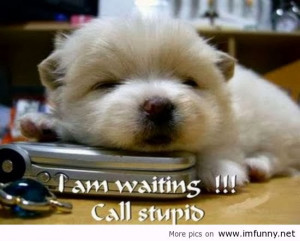 Cute Animals with Funny Quotes