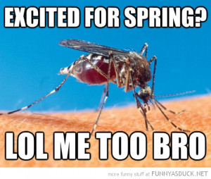 mosquito fly excited for spring me too bro funny pics pictures pic ...