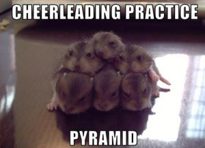 ... animals, lol animals, lolcats, funny animal caption pictures, funny