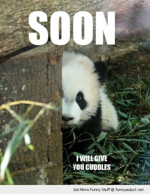 Fluffy Thing Fridays – Pandas!!