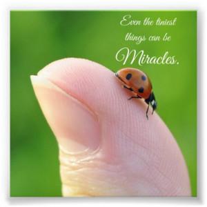 Ladybug Tiny Miracles Quote Square Photo Print