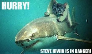 cat, ride, shark, steve, irwin, Too, late, Crikey