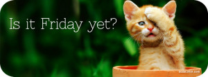 Friday Cat Facebook Cover