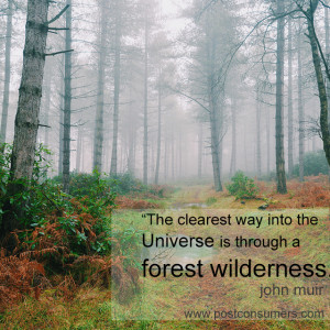 Favorite John Muir Quotes: The Universe and the Forest