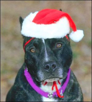 funny-life-quotes-cute-sad-dog-christmas-hat.jpg