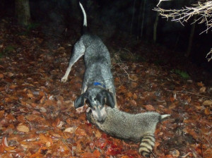 Funny Coon Hunting Quotes. QuotesGram