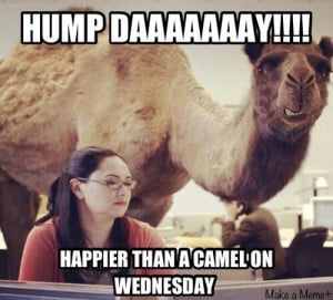 Related Funny Hump Day Quotes Happy