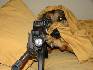 Funny Animals With Guns Shooting Wallpapers 2013