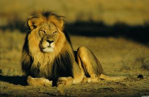 LION-facebook.jpg