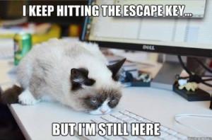 Happy Friday, Kitty Cat, Cat Quotes, Grumpy Kitty, Grumpycat, Cat Mems ...