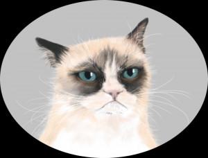 Tard The Grumpy Cat Wallpaper