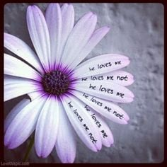 ... loves me not love love quotes girly flowers sad sad quote heart broken