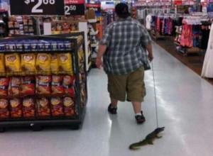Meanwhile at Walmart Pet Crocodile Alligator