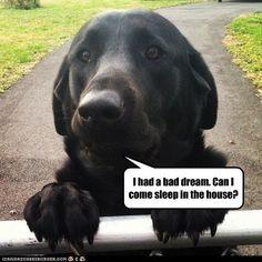 black lab pics has a hotdog black lab loldogs n cute puppies funny dog ...