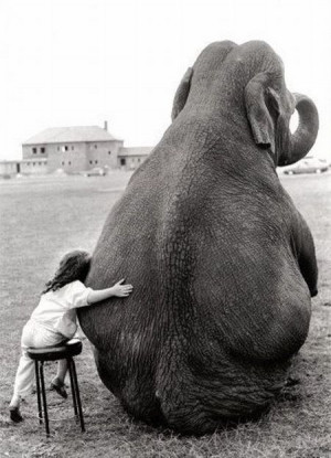 elephants what-i-love-about-life
