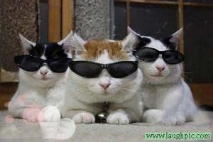 我们是无敌小猫咪三剑客,酷吧我们,啊哈哈哈~~~~