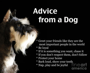 Advice From A Dog Photograph