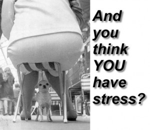 stress category funny pictures stress