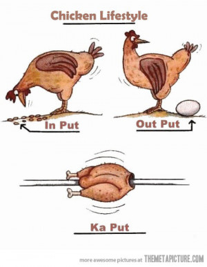 Funny photos funny chicken drawing clipart