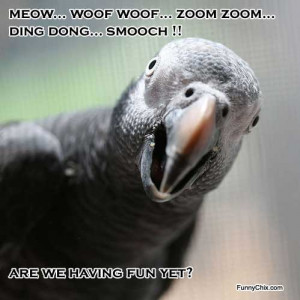 Meow. Woof, woof. Zoom zoom. Ding-dong. Smooch