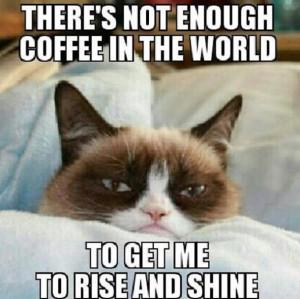 ... days ago http meme lol com funny grumpy cat meme lol funny pictures
