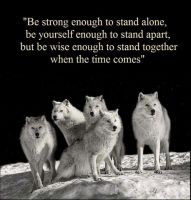 strong #wolf #wolves #animals