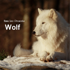 NAMA CEO Working Hard to Save Endangered Wolf through Book & Wolf CD