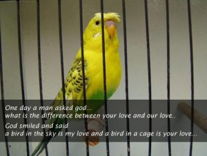 ... What Is The Difference Between Your Love And Our Love - Birds Quote
