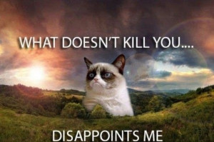 funny-animals-grumpy-cat-disappointment