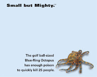 Novack+Macey+Small+but+Mighty+octopus.jpg