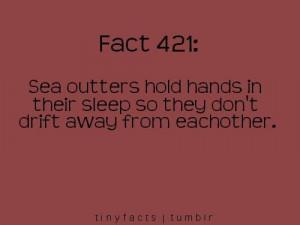 Quotes / i knew i liked sea otters :)