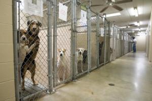 Animal Rescue - Animal Shelter Reform