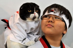 Karate Cat - Return to Funny Animal Pictures Home Page