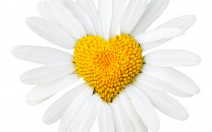 daisy flower quotes 3 flower quotes inspirational quote daisy flower ...