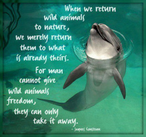 dolphin quotes