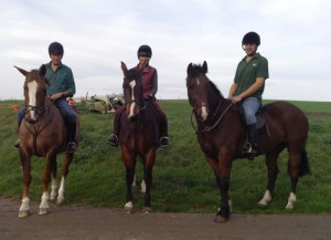 BKMS-Skywalker a pure bred Gelding bred by Anne Wrigley whipping in ...