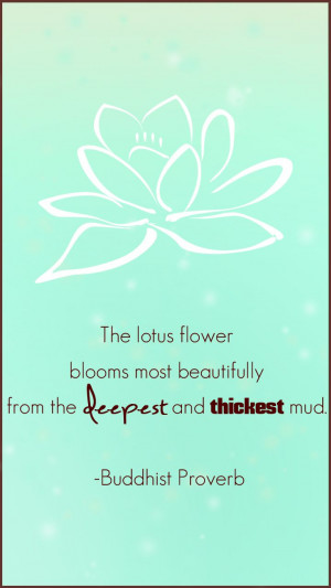 Mud, Lotus Flowers, Flower Bloom, Buddhists Proverbs, Buddhist Quotes ...
