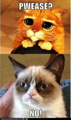 Grumpy Cat Quotes Titanic 296eb2d782f2491c655e4d98ba9e ...