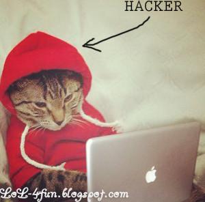 Funny cat hacker