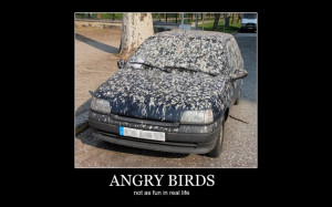 Why do birds poop on cars so much anyway? I think that they are just ...