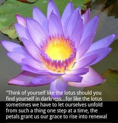 Buddha Lotus Flowers Peace, Buddhism, Asia Favoriteplacesspac, The ...