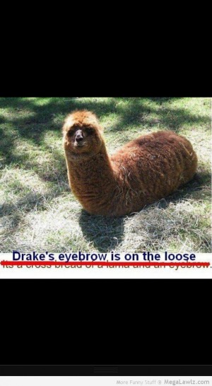 Funny About Eyebrows
