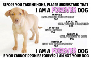 Find a Local Dog Adoption Center or rescue shelter