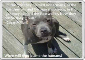 Fridge Magnet Pit Bull dog Cesar Millan Quote Staffordshire bull ...