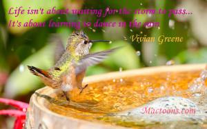 Powerful Music Quotes: Rufous Hummingbird Dancing In Rain