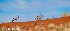 Safari Lodging Rates & Trip Quote Visitors Guide